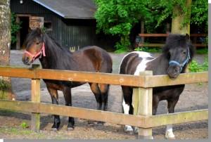 Die Pferde Girl und Oskar