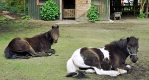 2014_Ponys_Girl_und_Oscar