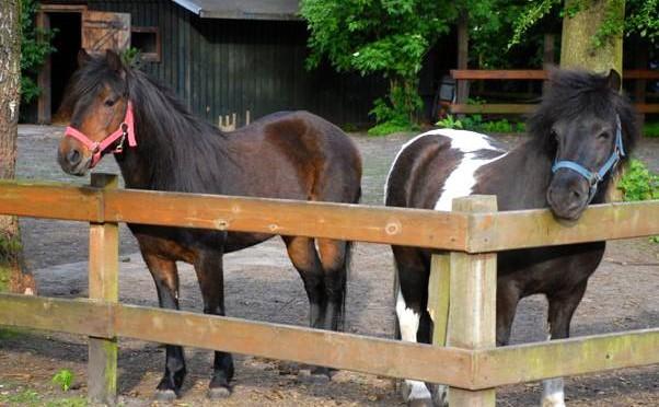 Konzept zur Haltung und zum pädagogischen Einsatz von Ponys am Steinadlerweg
